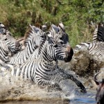 7 Days Safari to Serengeti,Tarangire and Ngorongoro Crater
