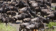 3 Days Safari to Tarangire,Lake Manyara and Ngorongoro Crater